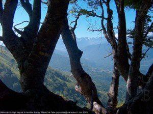 Vallée de l'Ariège depuis la montée d'Appy