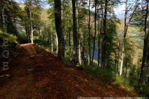 Forêt de la Coste (1500m)