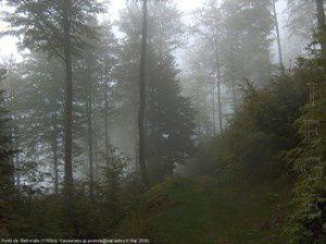 Forêt de Bethmale (1200m)