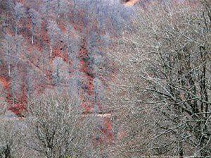 Forêt de Bethmale