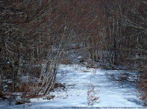 Forêt de Montaillou (vers 1500m)