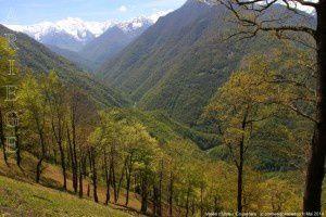 Vallée d'Ustou