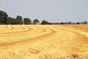 Plaine de l'Ariège