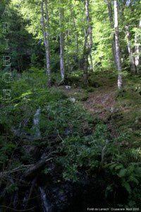 Forêt de Lamech