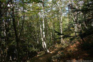 Forêt (1750m)
