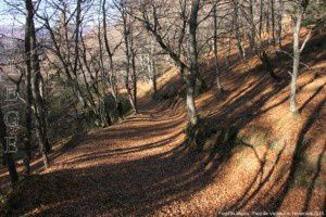 Forêt de Miglos