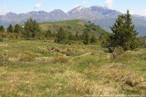 Mont Redon vu des Gourgues (1720m)
