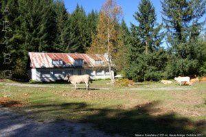 Maison forestière (1221m)