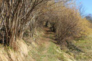 Descente au col de Lartigue (886m)