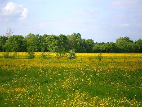 Les prairies prennent des teintes dorées en mai
