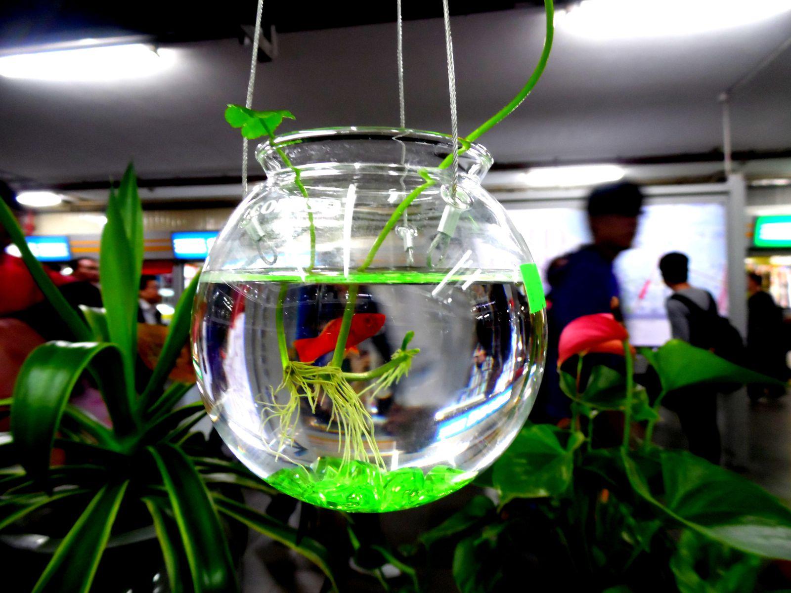 dans un magasin de plantes vertes une idée cadeau
