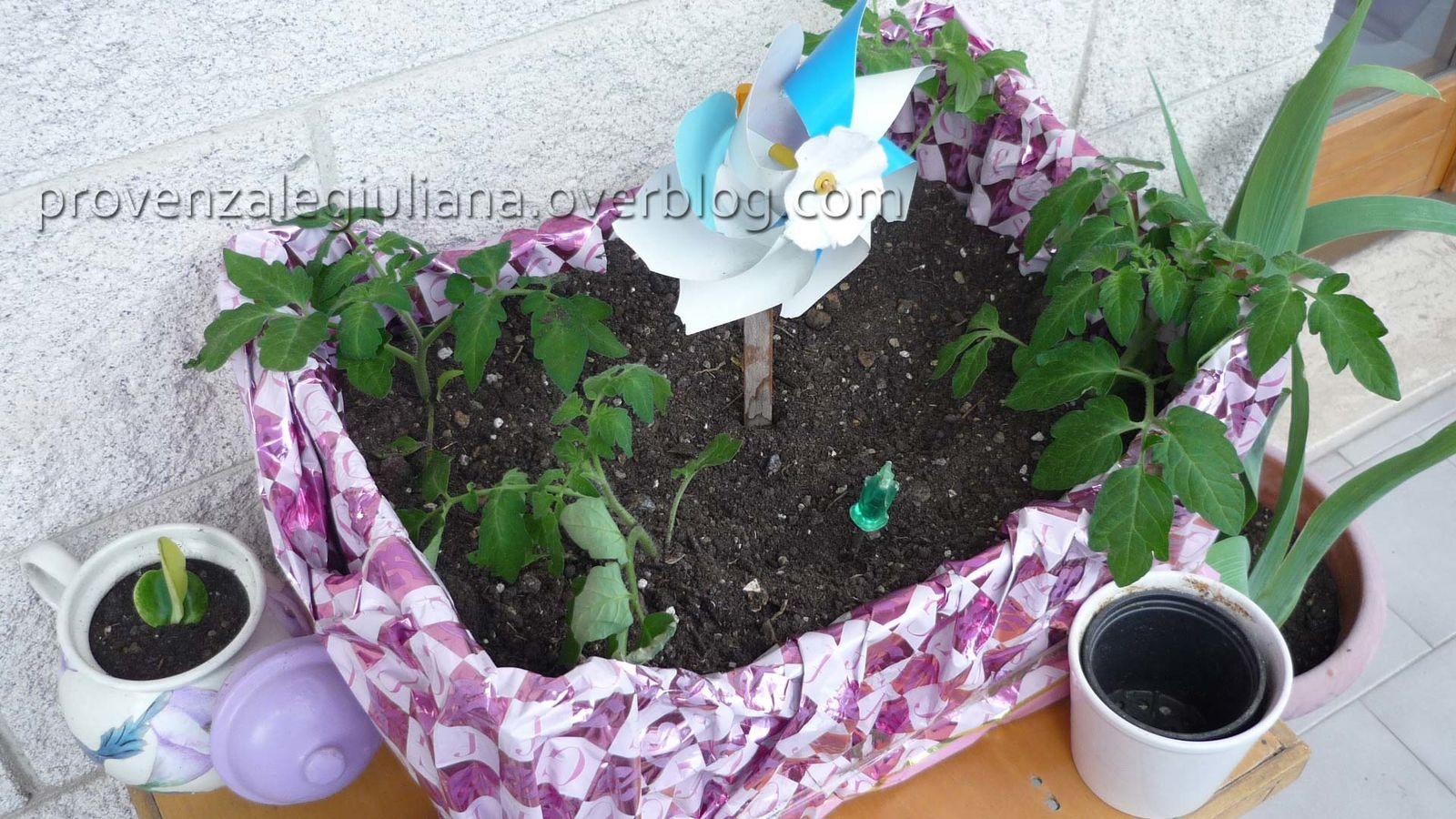Come creare un piccolo orto di pomodori