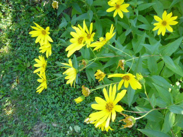 Quelques fleurs d'été,