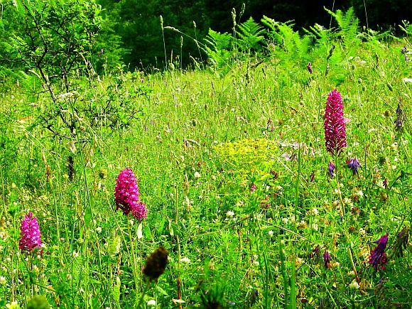 The meadows in Strandja are full of wild flowers and a spectacular sight
