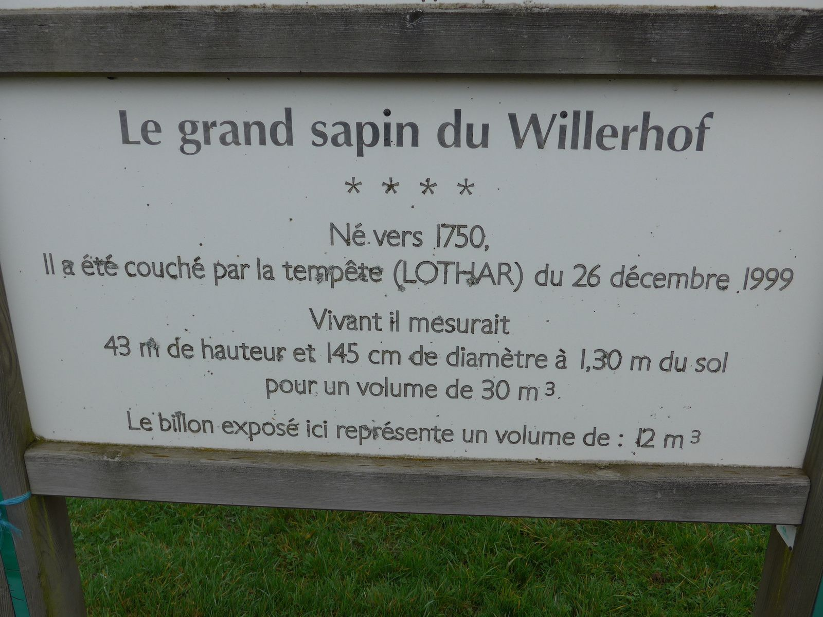 Le grand sapin du Willerhof