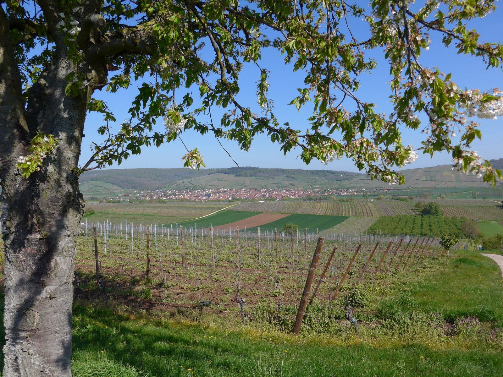 Nous quittons le village de Traenheim, direction Balbronn