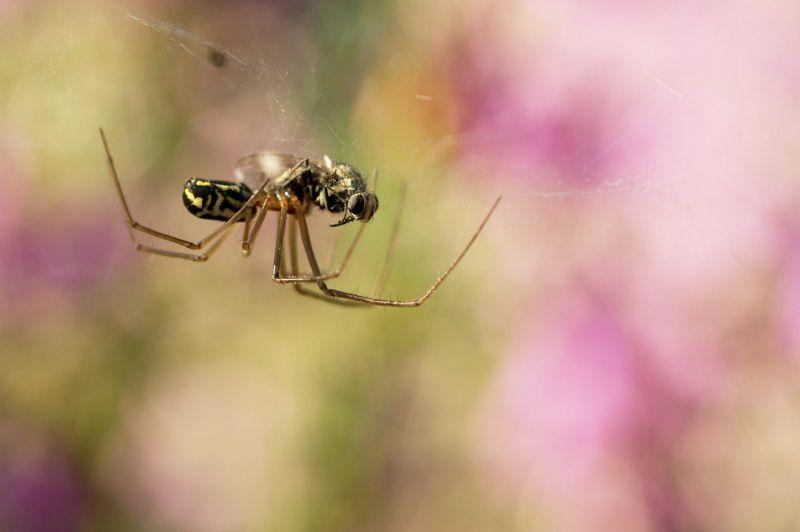L'araignée et la mouche