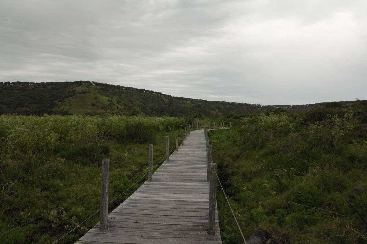 Tower Hill Reserve