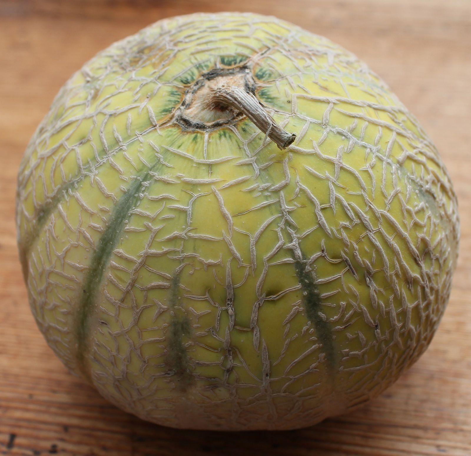Qui a récolté le plus gros melon en septembre 1928 ?