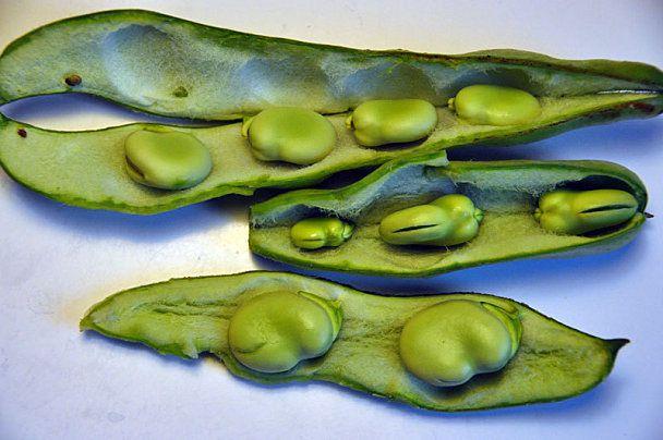 Les fèves fraîches - recettes n°2. Exceptionnelle, rapides, goûteuses et faciles...