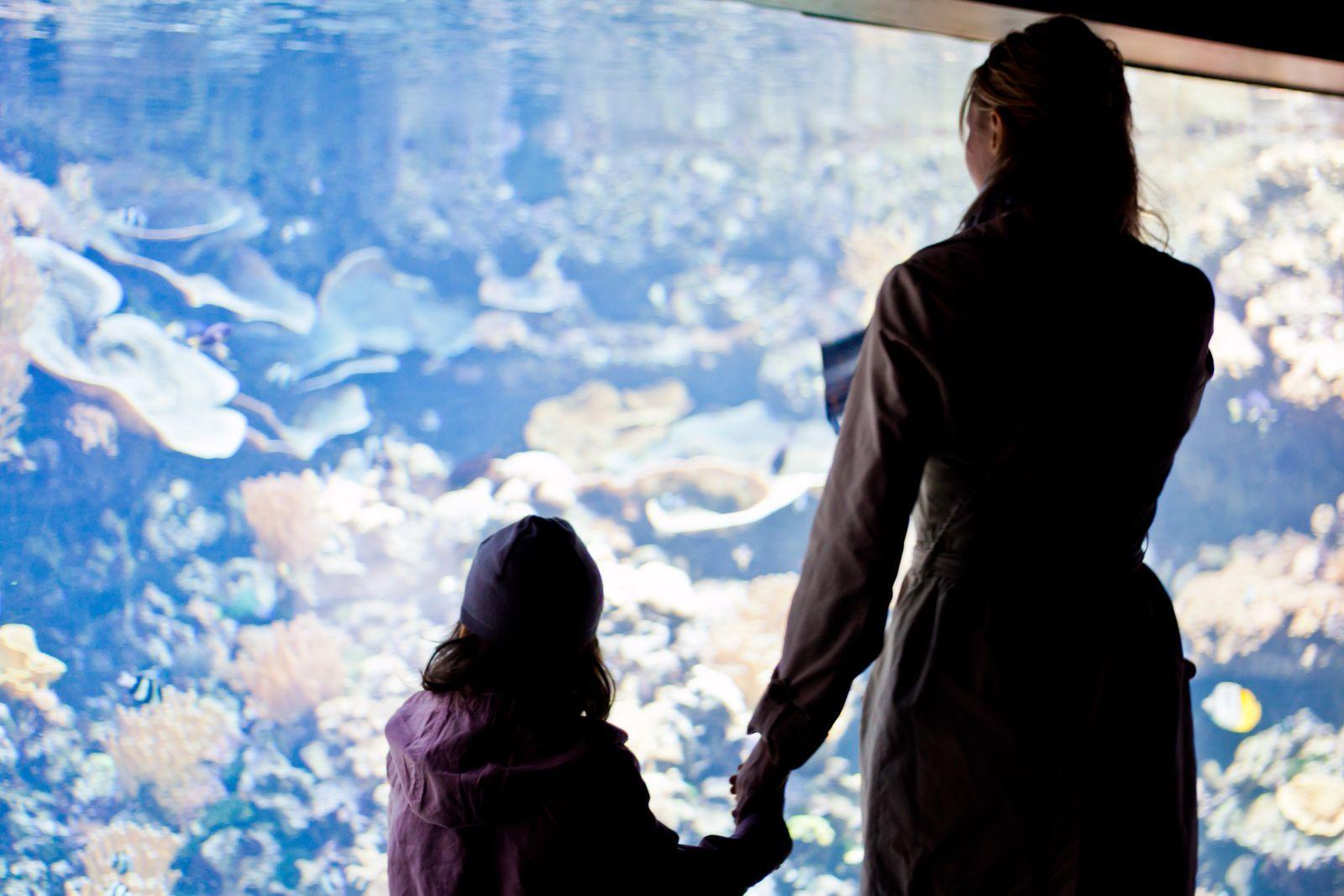 Aquarium de Paris : entrée gratuite pour les adultes