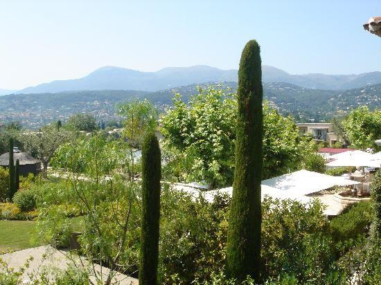 « L'olivier est un arbre familier en Provence, à tel point qu'on l'appelle par son prénom. » de Jean-Marc Lenglen