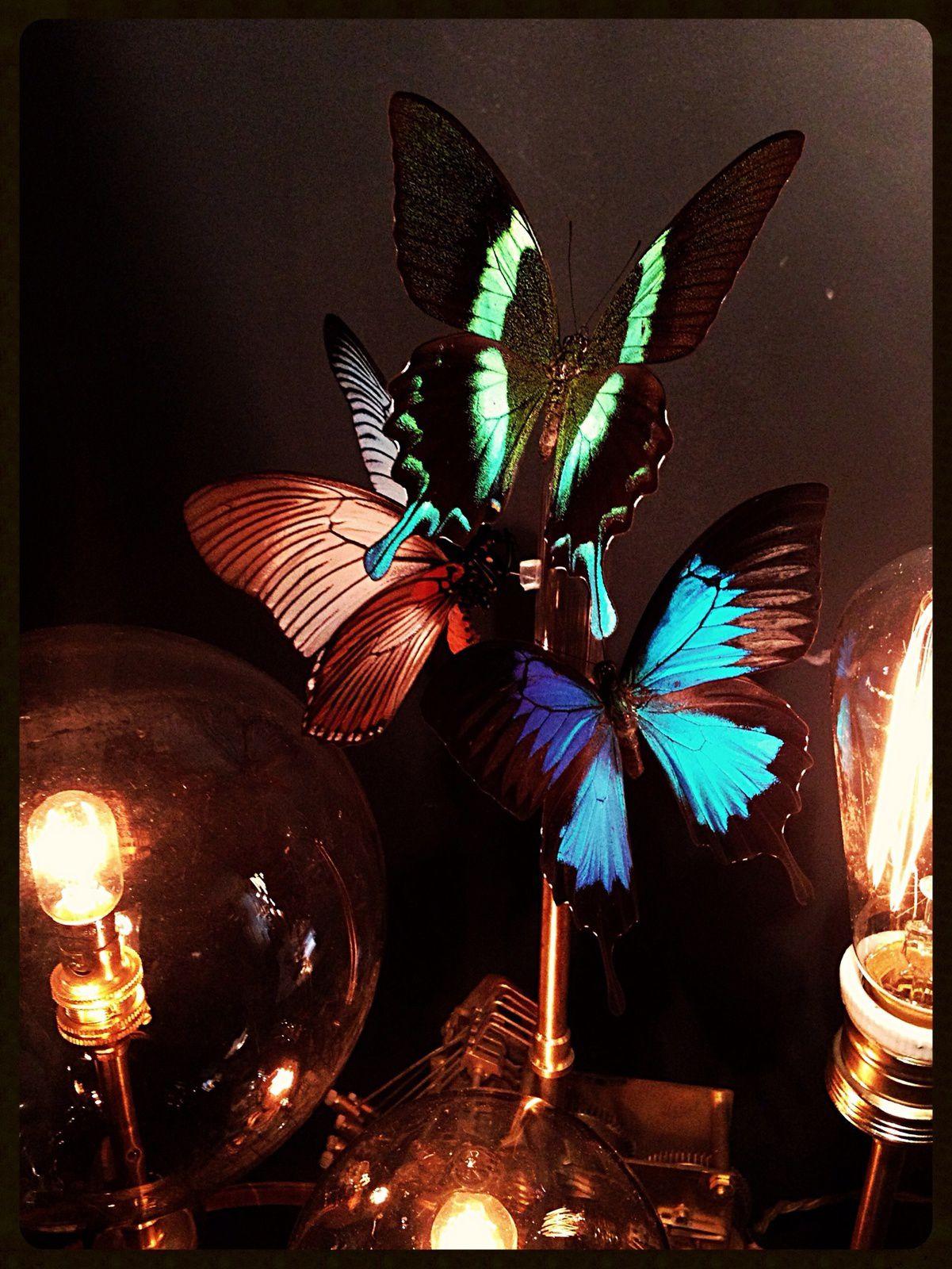 Lampe curiosité papillons exotiques ancien globe de mariée Napoléon III ampoule Edisson