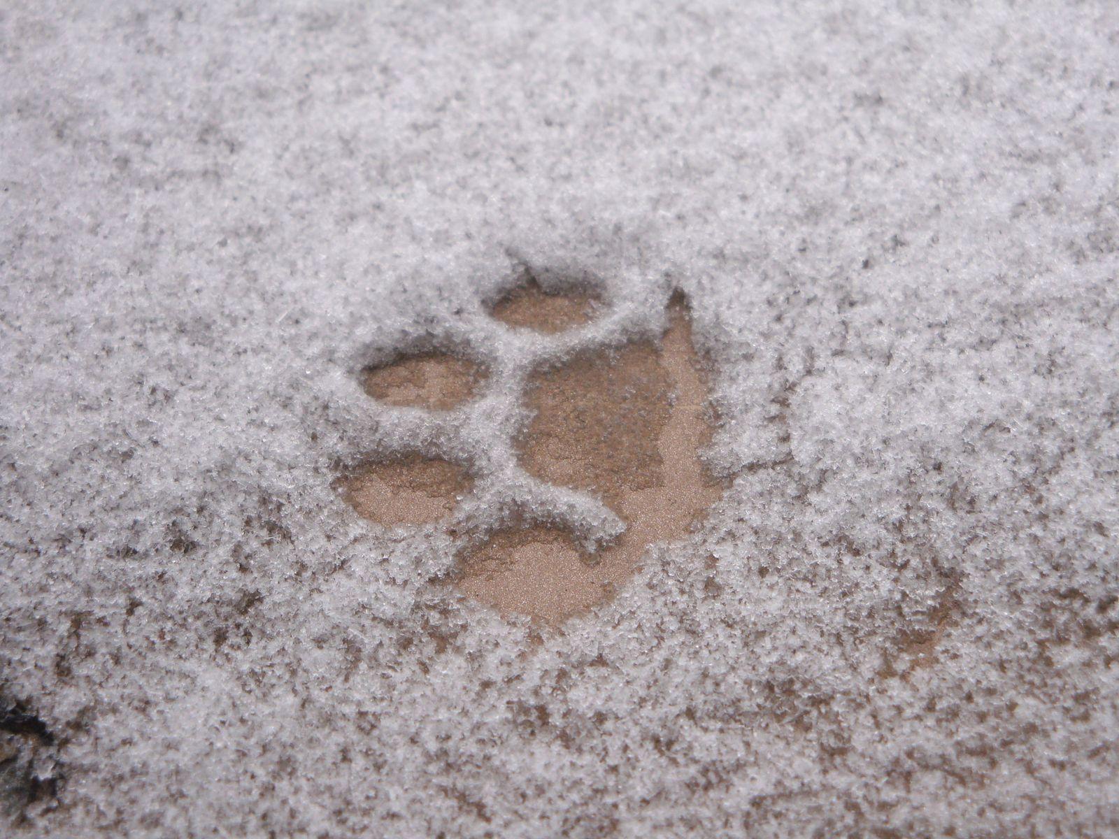 Hyde Park - oui, je sais, le visage de mon beau Prince Charmant se dégrade au fur et à mesure que ses pieds sont mouillés par la neige...!