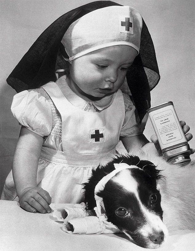 Comment devenir Vet Nurse en Angleterre ?