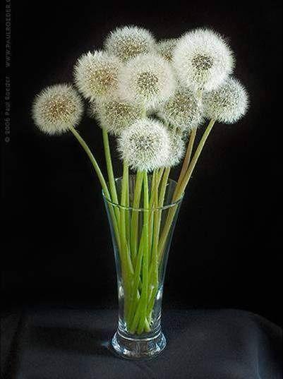 Mettez en valeur vos fleurs