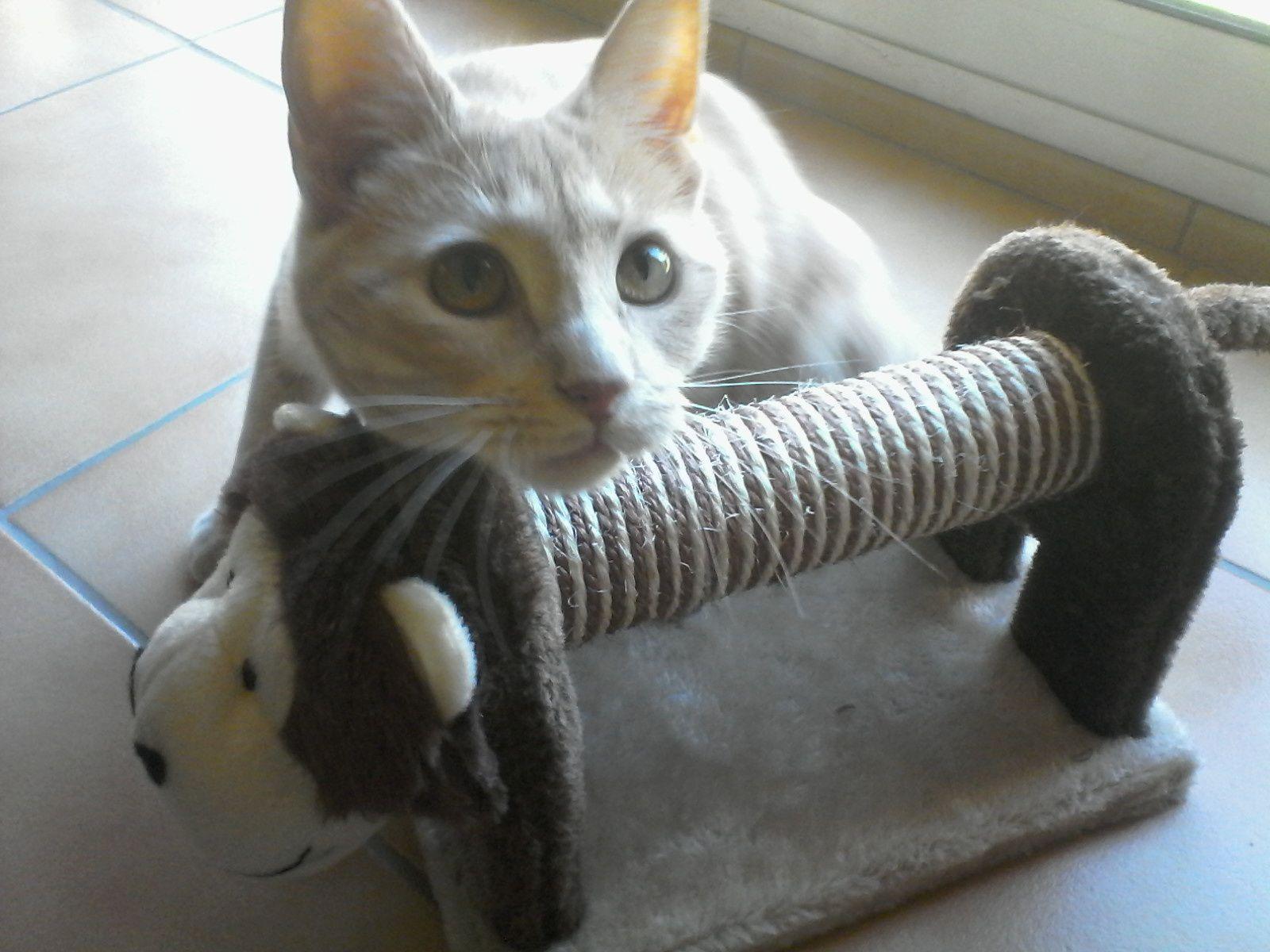 jouet chat lidl