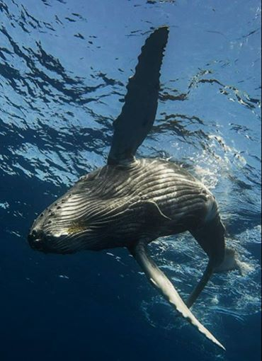 La saison des baleines débute &#x3B;-)