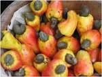 Good cashew nuts from a village of Parakou Benin The Test gives 47LBS