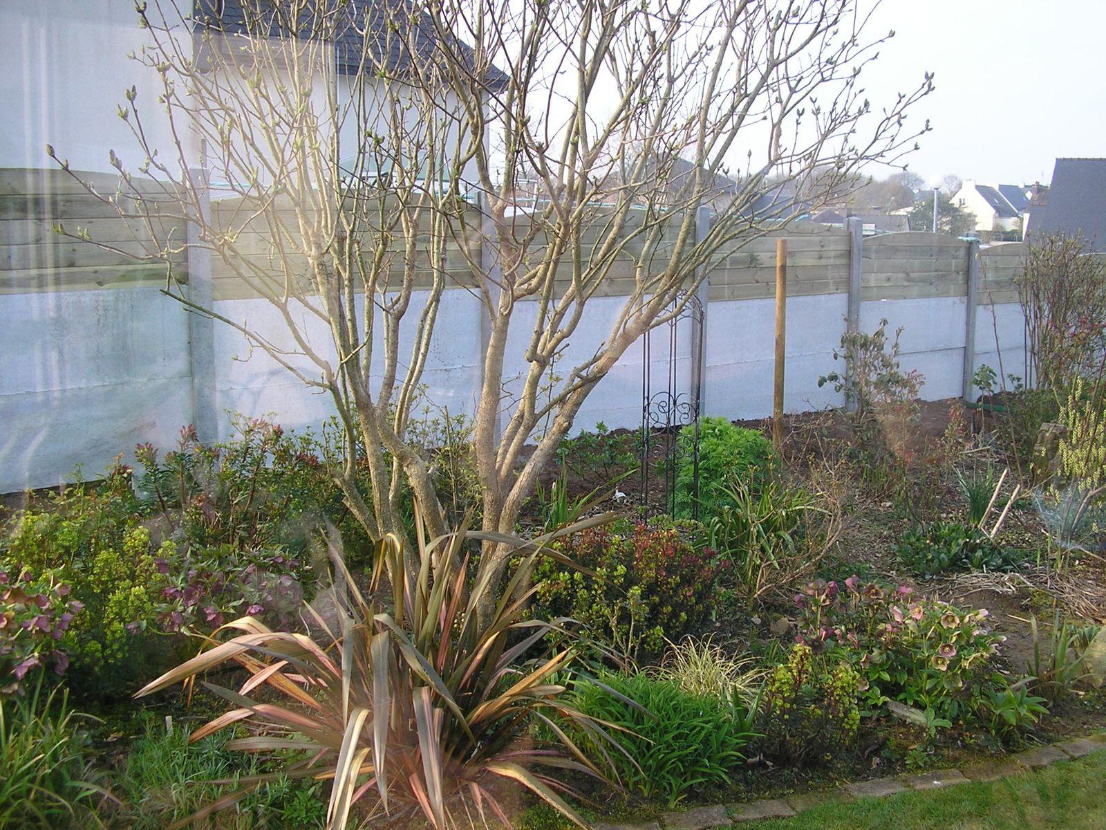 Mise en place de la palissade  au fond du parterre pour remplacer la haie. J'ai l'intention de planter des azalées, des rhododendrons et un kalmia pour cacher les plaques en béton et des rosiers à chaque poteau.