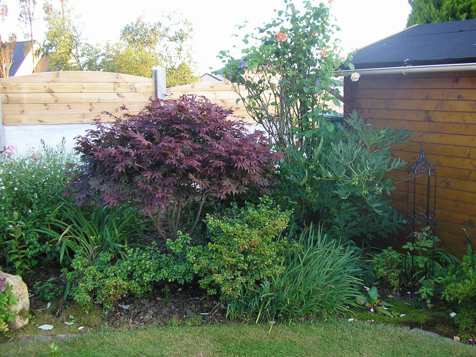 Le jardin a souffert du temps sec de juillet mais les agapanthes et les rosiers en ont bien profité. J'ai noté les plantes qu'il va falloir déplacer cet automne pour les mettre en valeur.