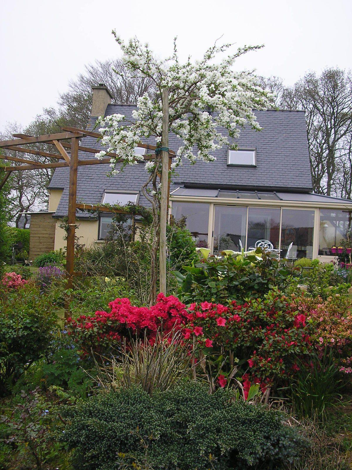 J'ai planté une bouture de mon viburnum plicatum il y a deux ans devant la maison. Maintenant, il y en a trois au jardin. Ils sont trop beaux au printemps et en automne (feuillage rouge)