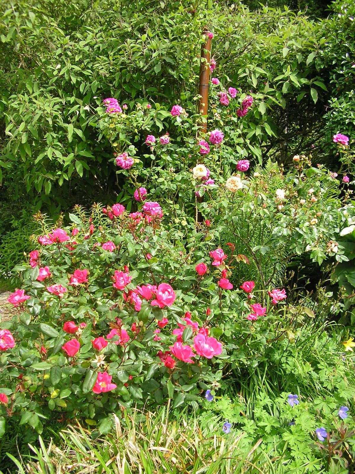Le jardin de mes parents au mois de juin coeur de marie for Le jardin en juin