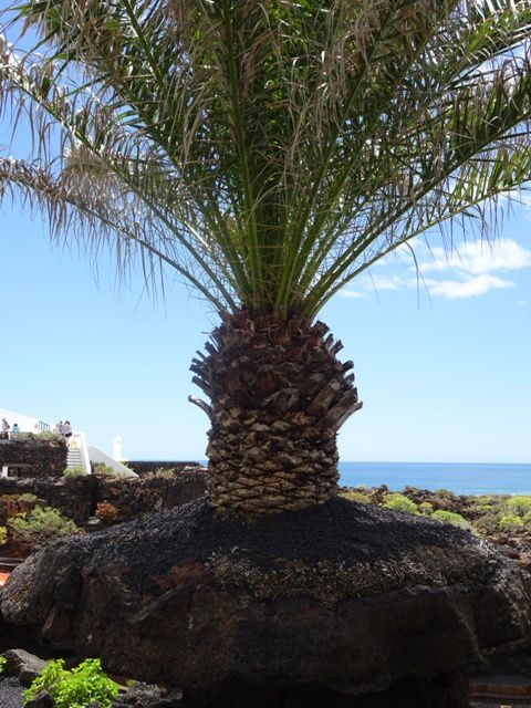 Dernières photos de Lanzarote