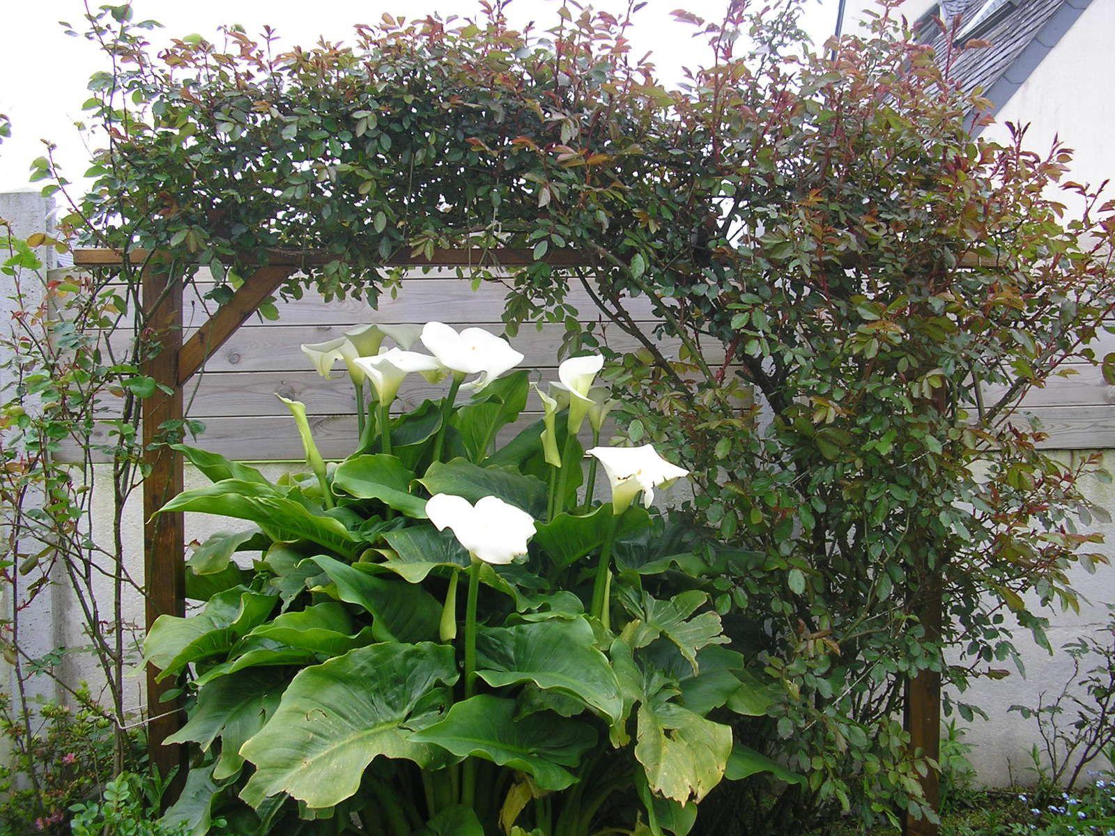 Foire aux plantes au Stang-Alar!!!