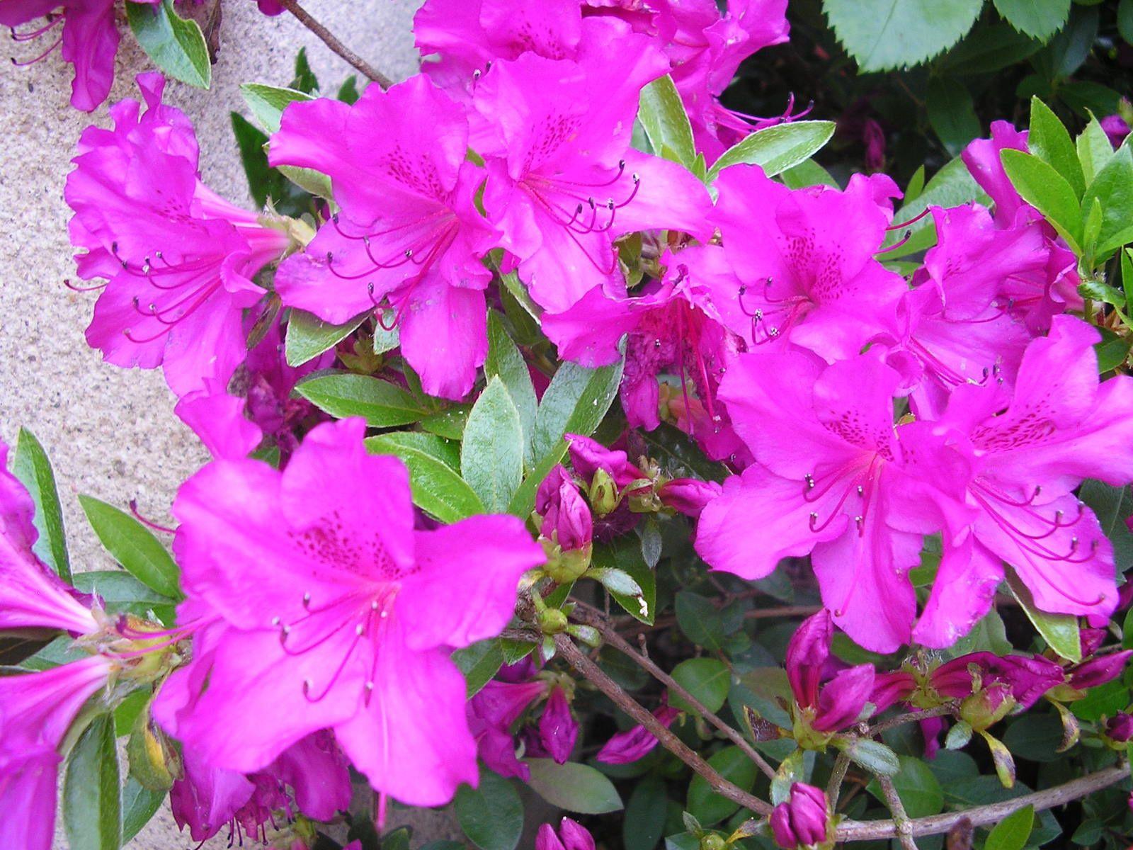 Fête des fleurs à Ploudal
