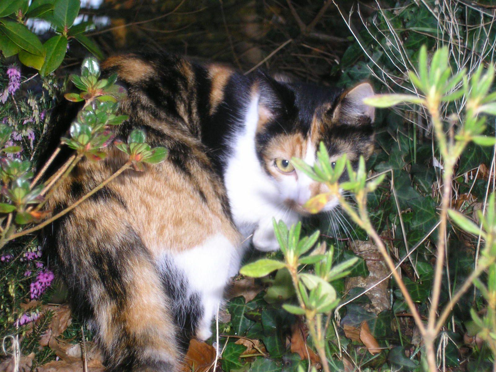 Katniss (la sœur de chatouille) est venue me rendre visite.