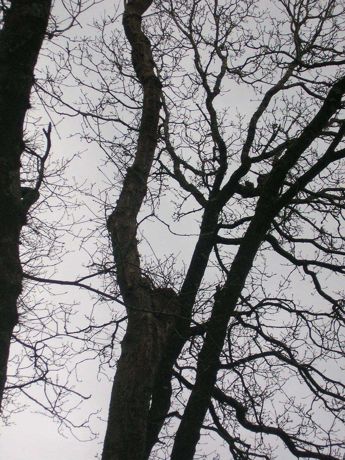 Chercher l'écureuil! Il y en a un mais il faut le voir :-)  je n'est pas pu zoomer davantage.
