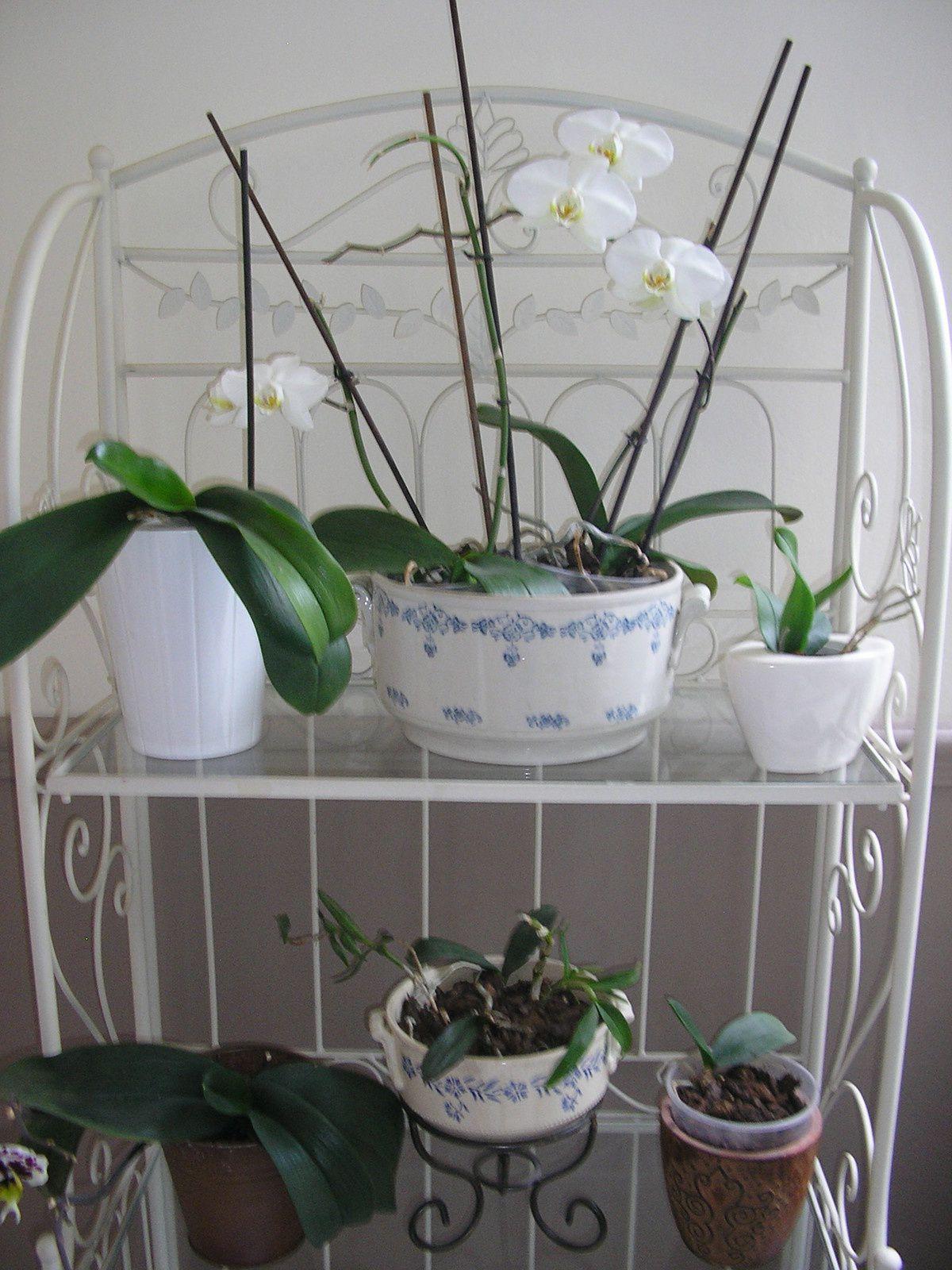Nouvelle idée déco: de vieilles soupières pour les orchidées