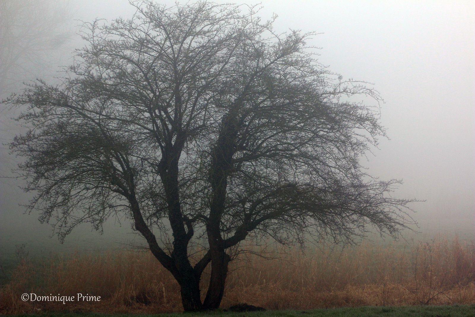 Un matin de brume
