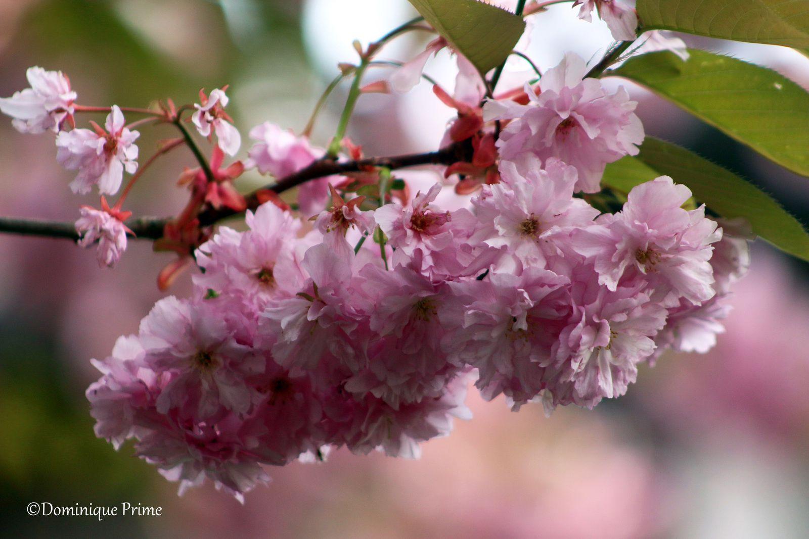 Parcours fleuris cliquez sur le lien