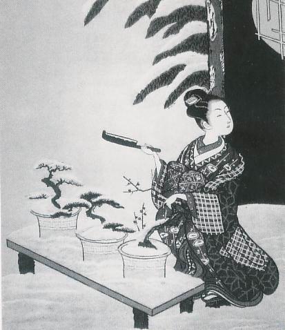 La storia dei Bonsai