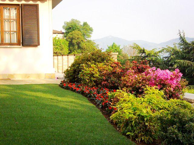 i cespugli da giardino pi belli la guida al giardinaggio