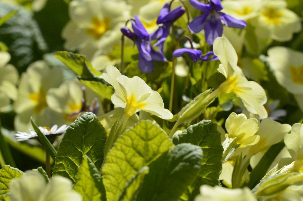 i fiori da piantare a marzo la guida al giardinaggio
