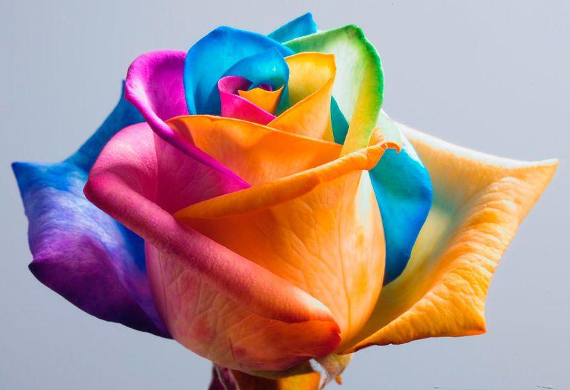 Rêve ta vie en couleur, c'est le secret du bonheur   Pinamon