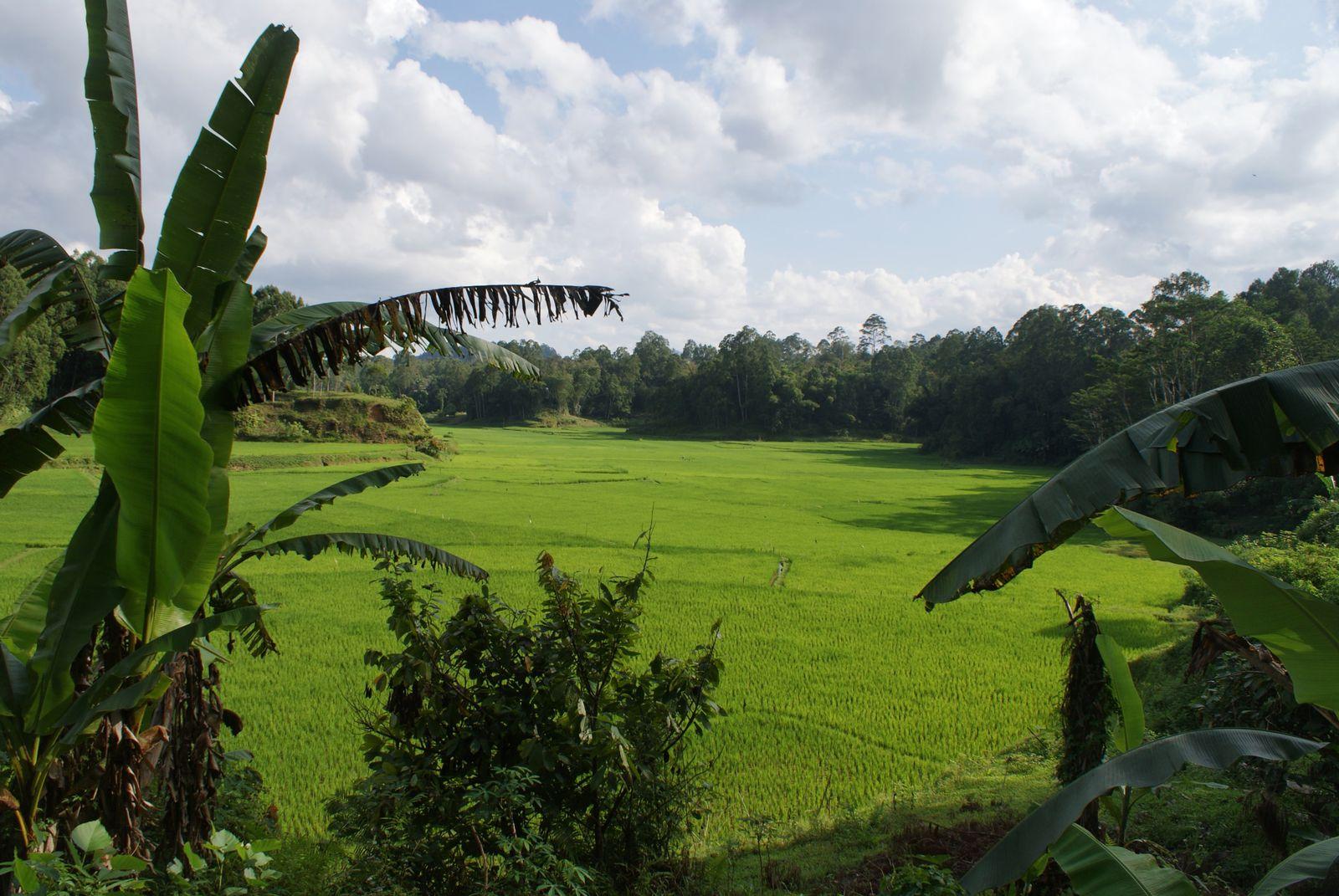 Sulawesi - Rantepao / 2
